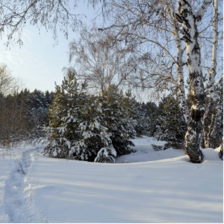 Snowy-Winter-Tag Fotoskulptur Ornament
