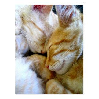 Snuggle-Kätzchen-Postkarte