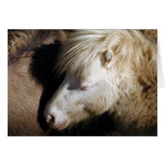 Snuggled Pony Karte