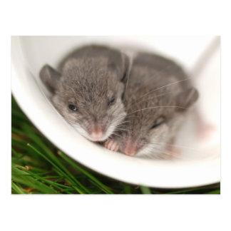 So schläfrige Baby-Mäuse Postkarte