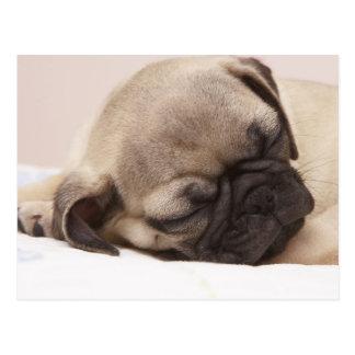 Solid schlafender Welpe Postkarte