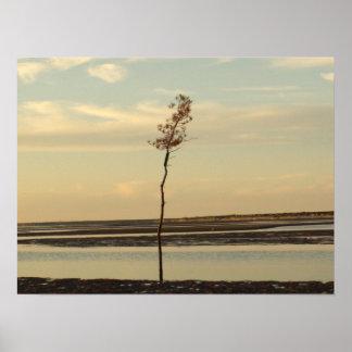 Solo- Baum auf Cape Cod-Strand-Bild Poster