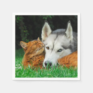Somalische Katzen-sibirischer Servietten