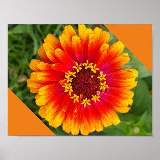 Sommer-Blume in der vollen Blüte Poster