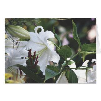 Sommer, Casa-BLANCA-Lilien Karte