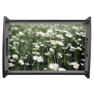 Sommer-Gänseblümchen Tablett