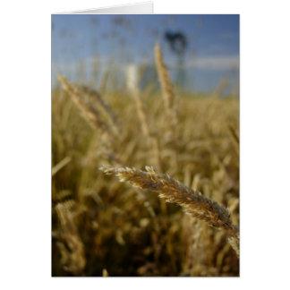 Sommer-Gräser Karte