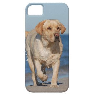 Sommer-Labrador Schutzhülle Fürs iPhone 5