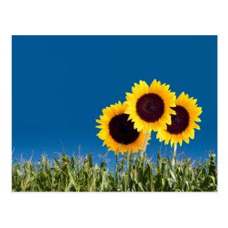Sommer-Postkarten