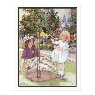 Sommer-Rosen durch Anne Anderson Postkarte