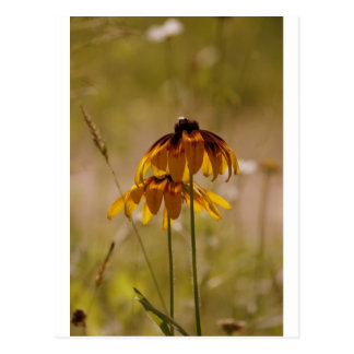 Sommer-Sonnenblume Postkarte