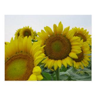 Sommer-Sonnenblume-Reihe Postkarten