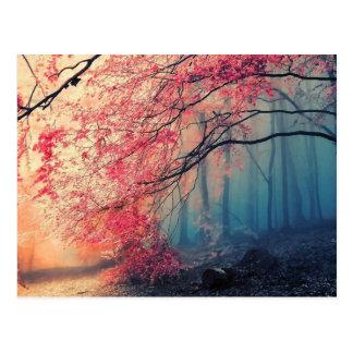 Sommer und Winter im Wald Postkarte