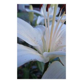 Sommer-weiße Lilie Briefpapier