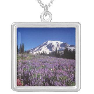 Sommer-Wildblumen an der Basis vom Mount Rainier, Versilberte Kette