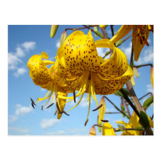 Sommerpostkarten gelbe Tiger-Lilien-Blumen blau Postkarte