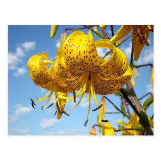 Sommerpostkarten gelbe Tiger-Lilien-Blumen blau Postkarten