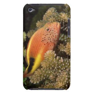 Sommersprossige hawkfish Stangen auf steinigen iPod Case-Mate Hülle