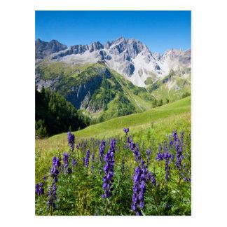 Sommerwiesen mit Sturmhut im Vordergrund Postkarten