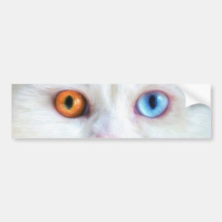 Sonderbar-Mit Augen weiße persische Katze Autoaufkleber