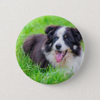 Sonderbare Augen-Border-Collie, die in grass.JPG Runder Button 5,1 Cm