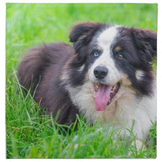 Sonderbare Augen-Border-Collie, die in grass.JPG Stoffserviette