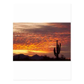 Sonnenaufgang Arizonas November mit Saguaro Postkarte