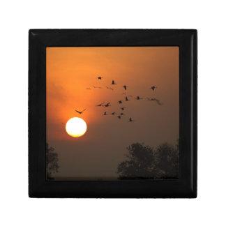 Sonnenaufgang mit Mengen der Fliegenkräne Erinnerungskiste
