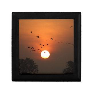 Sonnenaufgang mit Mengen der Fliegenkräne Geschenkbox