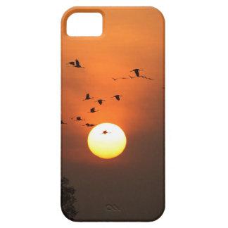 Sonnenaufgang mit Mengen der Fliegenkräne iPhone 5 Etuis