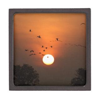 Sonnenaufgang mit Mengen der Fliegenkräne Kiste