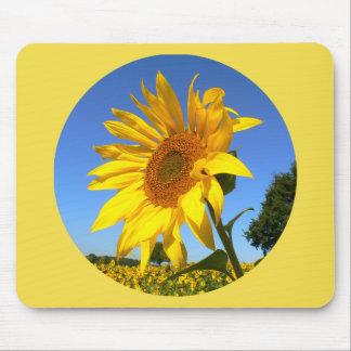 Sonnenblume 01.1.2., Feld der Sonnenblumen Mauspads