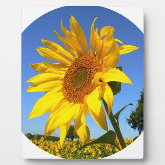 Sonnenblume 01.1., Feld der Sonnenblumen Fotoplatte