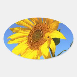 Sonnenblume 01.1., Feld der Sonnenblumen Ovaler Aufkleber