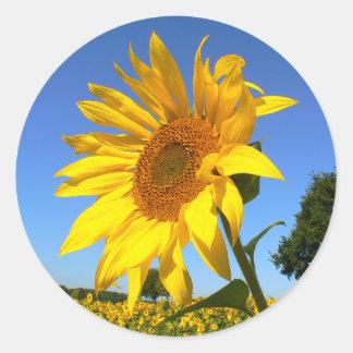 Sonnenblume 01.1., Feld der Sonnenblumen Runder Aufkleber