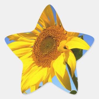 Sonnenblume 01.1., Feld der Sonnenblumen Stern-Aufkleber