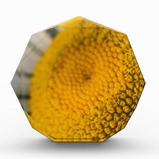 Sonnenblume Acryl Auszeichnung