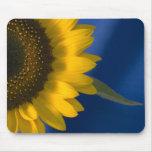Sonnenblume auf Blau Mousepad