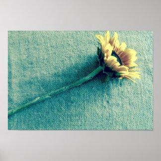 Sonnenblume auf Denim Poster