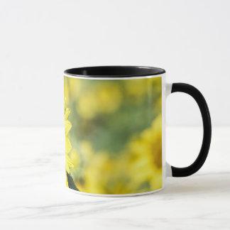Sonnenblume-Feld mit der Schmetterlings-Tasse Tasse