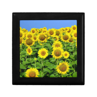 Sonnenblume-Felder Erinnerungskiste