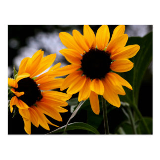 Sonnenblume-Foto Postkarte