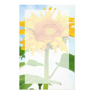 Sonnenblume, Gemeinschaftsgarten, Moses See, WA, Briefpapier
