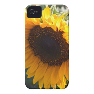 Sonnenblume im August iPhone 4 Cover