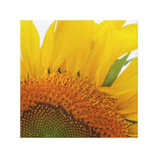Sonnenblume-Leinwand-Druck-Entwurf vier Leinwanddruck