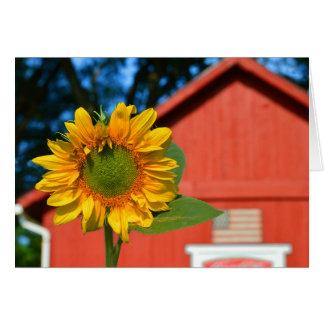 Sonnenblume mit roter Scheune Karte