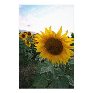 Sonnenblume-Nahaufnahme Briefpapier