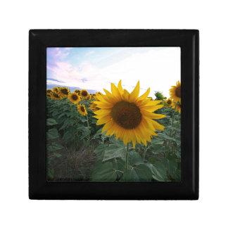Sonnenblume-Nahaufnahme Erinnerungskiste