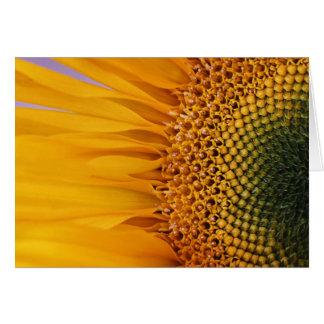 Sonnenblume-Nahaufnahme-Gruß-Karte (freier Raum Karte