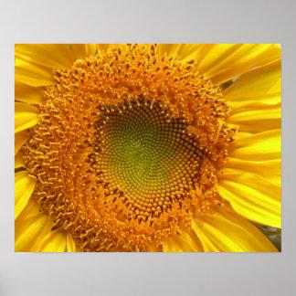Sonnenblume-Plakat-Drucke